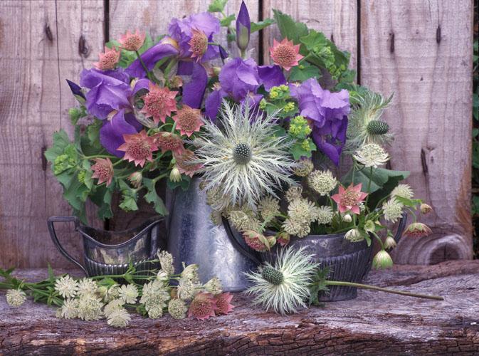 Blue_Violet_flowers