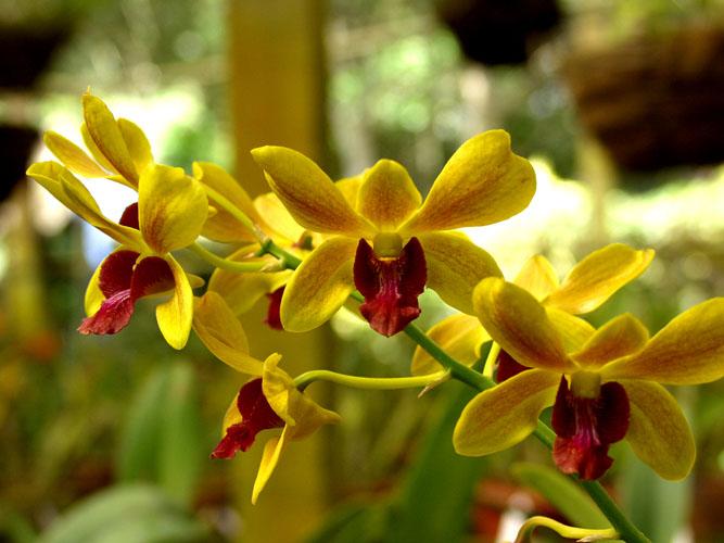 Rainforest_Orchids