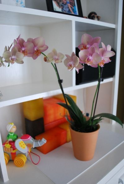 Justaddiceorchids